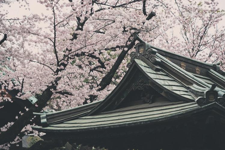 目黒 祐天寺 手水場と桜