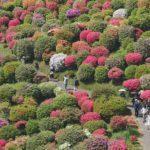 今年も塩船観音寺と薬王寺のつつじの花を撮影してきた