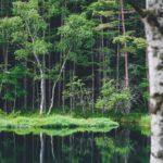 緑響く夏の御射鹿池へ撮影に行ってみた