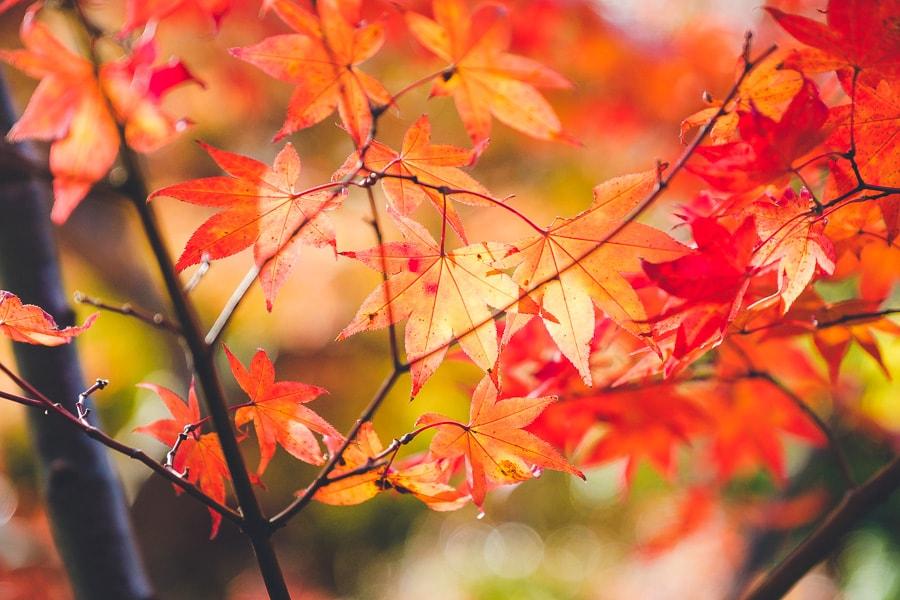 小林もみじ園 紅葉