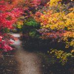 埼玉川口安行にある小林もみじ園の紅葉撮影に行ってみた
