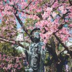 川口密蔵院の安行桜の撮影に行ってみた