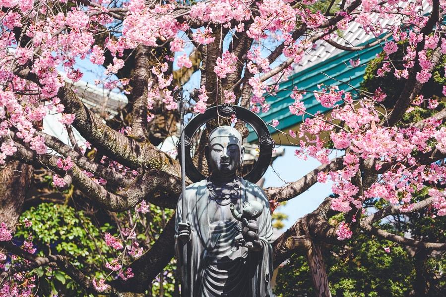 水掛地蔵尊 安行桜