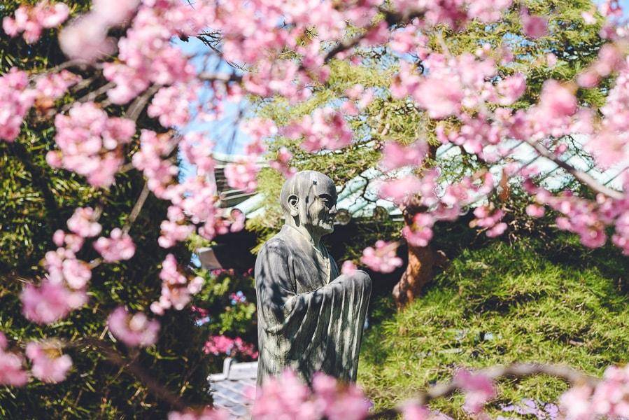 密蔵院 興教大師 安行桜