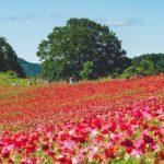 埼玉秩父にある天空のポピーへ撮影に行ってみた