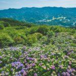 美の山公園の紫陽花を撮影しに行ってみた
