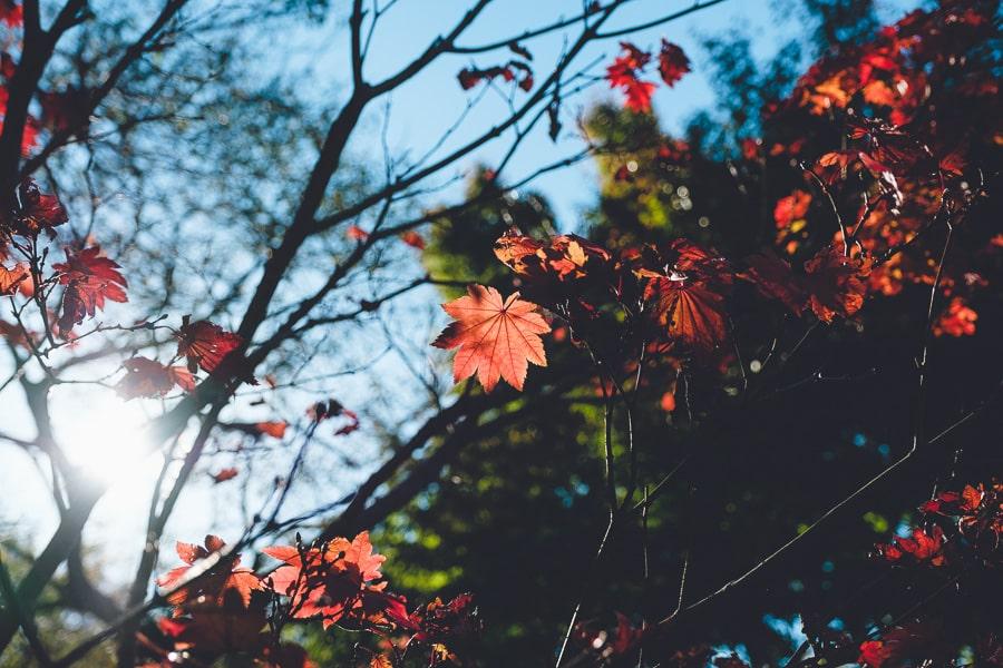 興禅院 紅葉