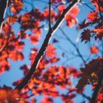 小林もみじ園へ紅葉の色づきを見に行ってみた