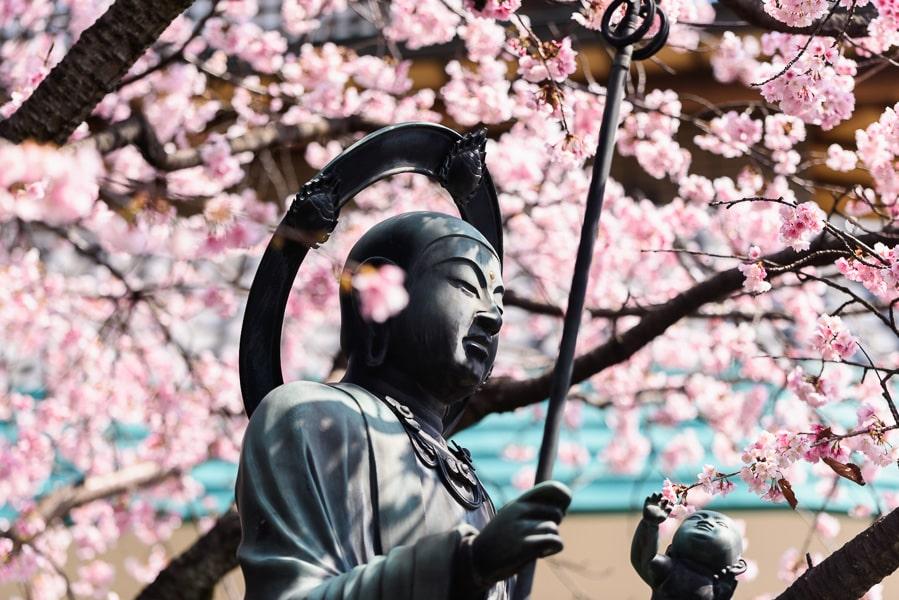 安行桜 地蔵菩薩 密蔵院