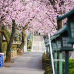 桜の新名所!密蔵院の安行桜を撮影してお地蔵さんの慈悲を感じて来た