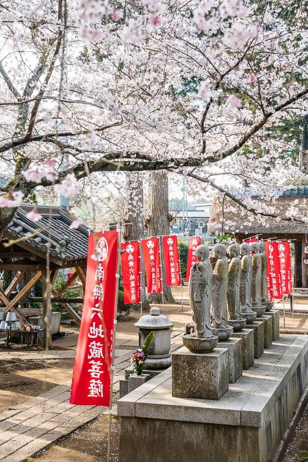 六地蔵寺 しだれ桜