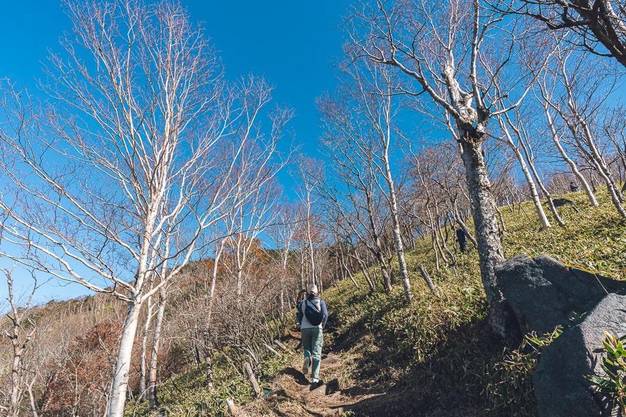 半月山展望台 紅葉