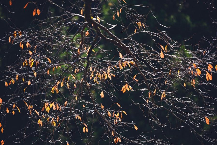 鳥居観音 紅葉