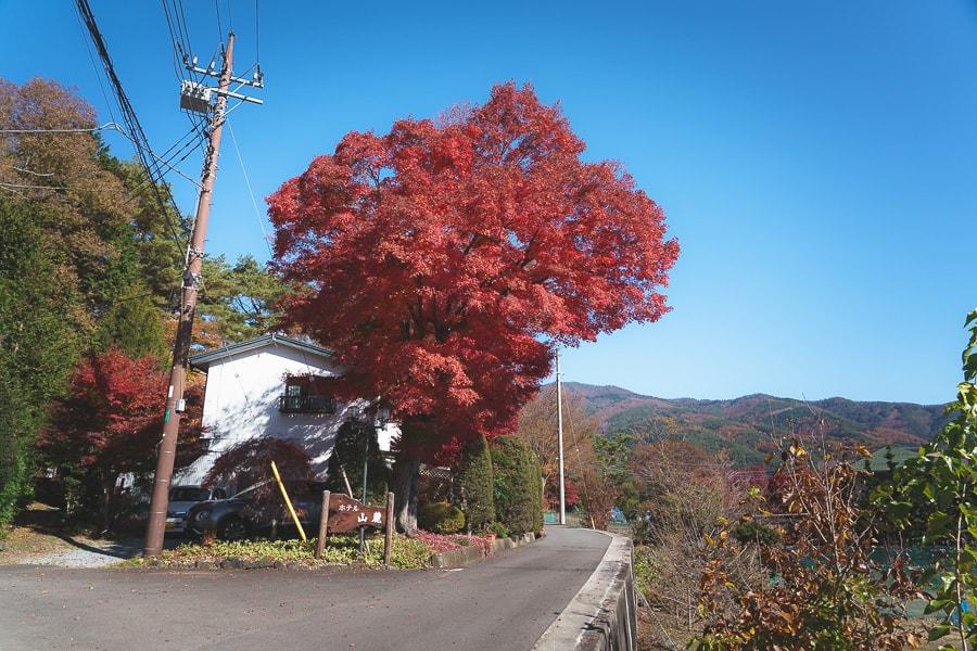 久保田一竹美術館 河口湖 富士山 紅葉