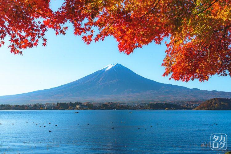 河口湖 富士山 紅葉