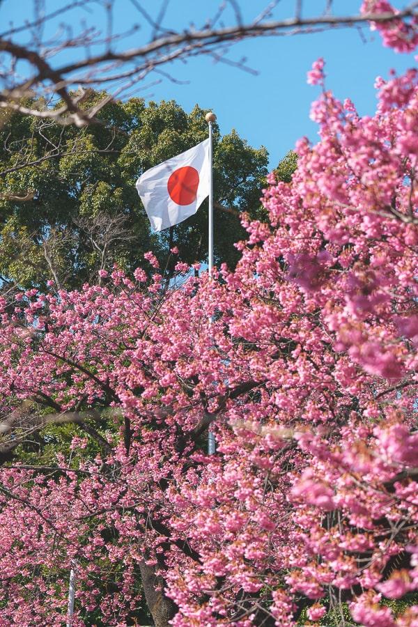 荏原神社 寒緋桜