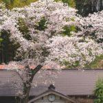 茨城大子町の桜が映えるお花見撮影スポットをゆるくのんびり写真を撮りに行ってみた