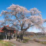 群馬沼田発知の一本桜感動してしまう3つのスポットを訪れて撮影してきた