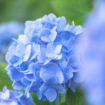 "<span class=""title"">埼玉秩父にある美の山公園の紫陽花天空を彩る風景を撮影してきた</span>"