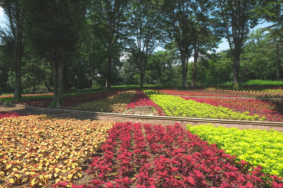 武蔵丘陵森林公園 コリウス